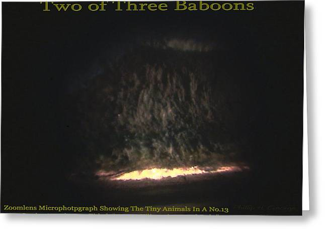 Two Of Three Baboons  Greeting Card by Phillip H George