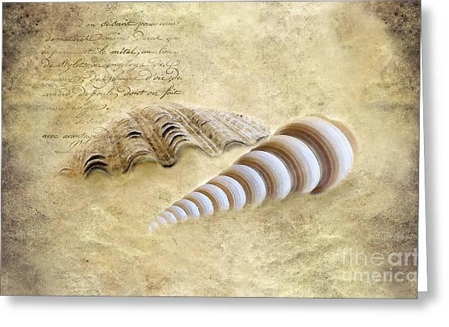 Two Seashells Greeting Card by Betty LaRue