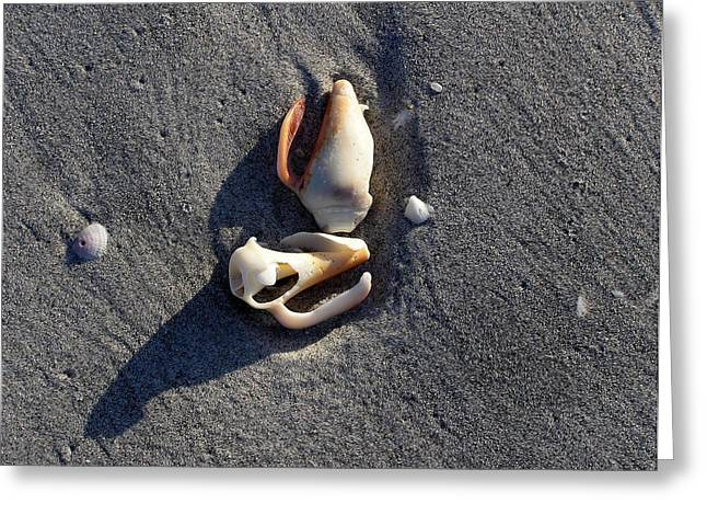 Two Shells On The Beach Greeting Card
