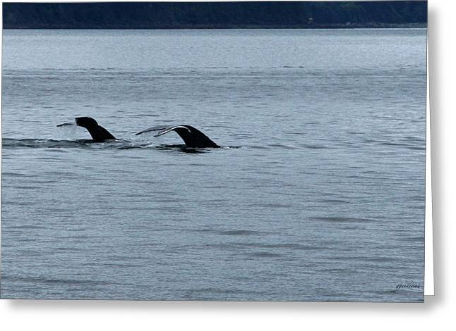 Two Tails Of Whales Greeting Card