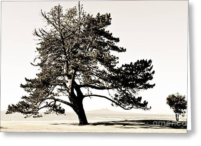 Two Trees On The Ocean Beach Greeting Card