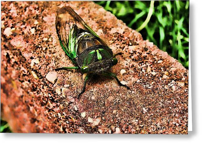 Ugh A Bug Greeting Card by Colleen Kammerer