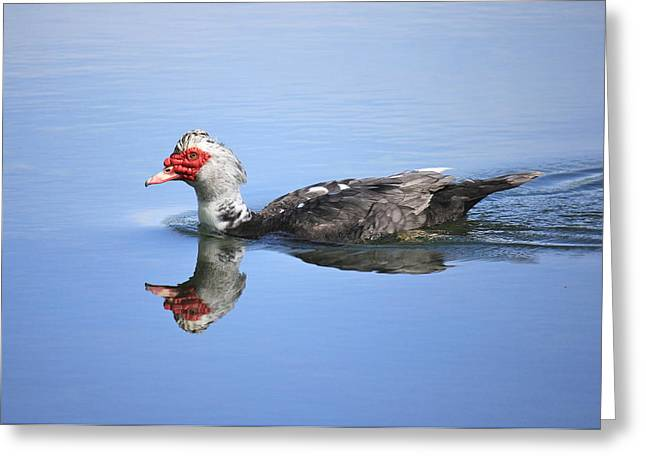 Greeting Card featuring the photograph Ugly Duckling by Penny Meyers