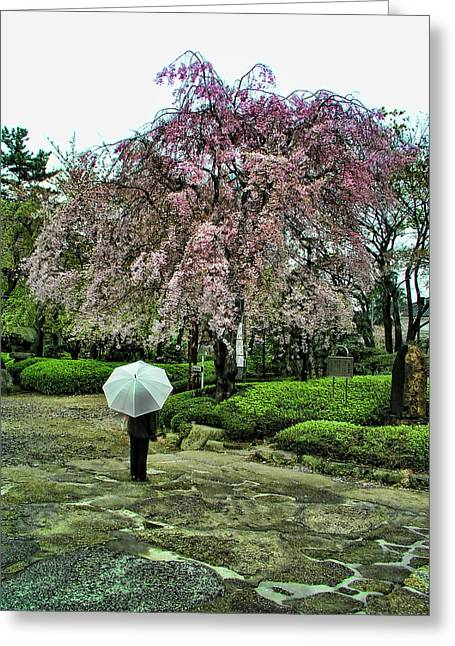 Umbrella With Cherry Blossoms Greeting Card