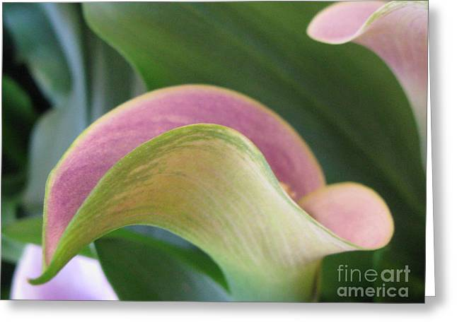 Undeniable Greeting Card by Tina Marie