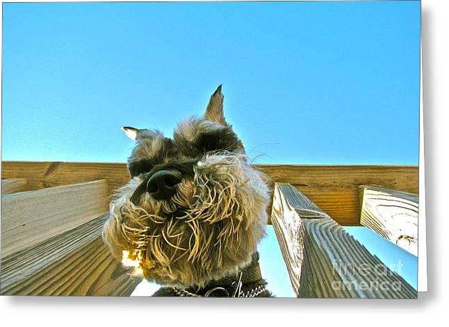 Under Dog Greeting Card by Arthur Hofer