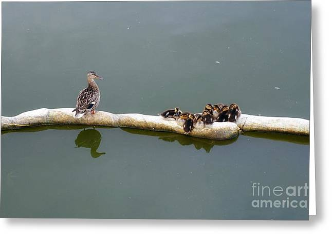 Under Mom's Watchful Eyes Greeting Card