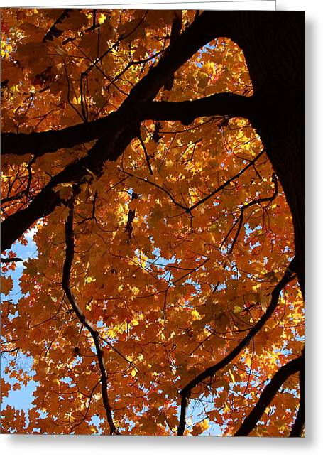 Under The Canopy Greeting Card by Lyle Hatch