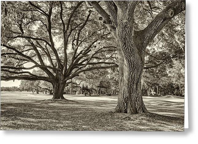 Under The Oaks Sepia Toned Greeting Card by Phill Doherty