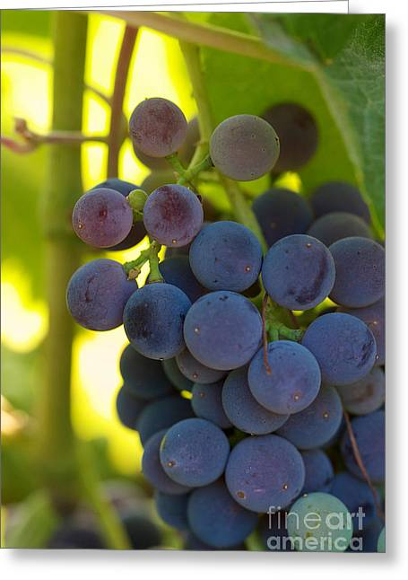 Under The Vine Greeting Card by Brooke Roby