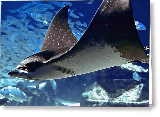 Underwater Flight Greeting Card by DigiArt Diaries by Vicky B Fuller