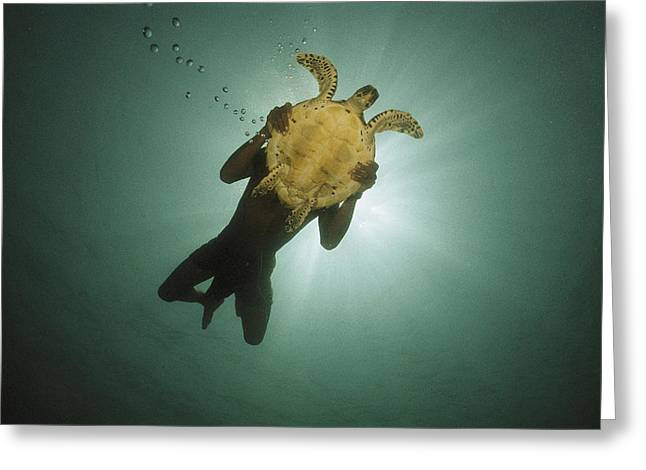 Underwater View Of Swimmer And Turtle Greeting Card by Nicolas Reynard