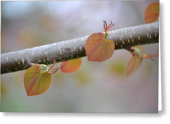 Greeting Card featuring the photograph Unfurling Buds In The Heart Of Spring by JD Grimes