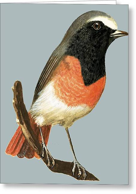 Unidentified Bird Greeting Card
