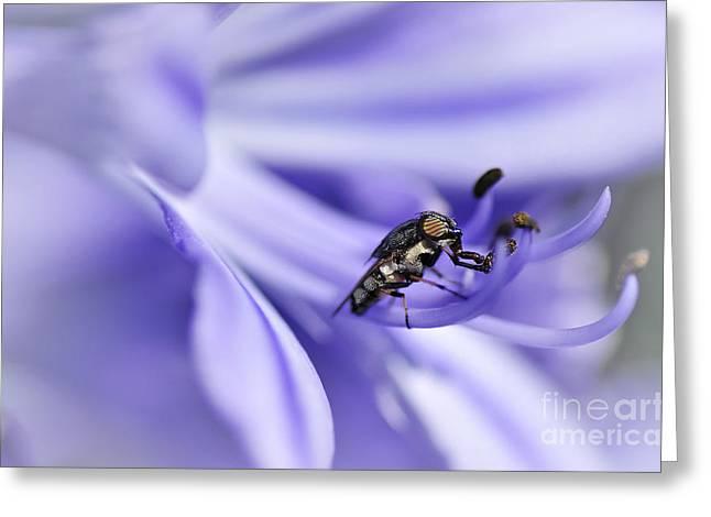 Unusual Fly On Agapantha Stamen Greeting Card by Kaye Menner