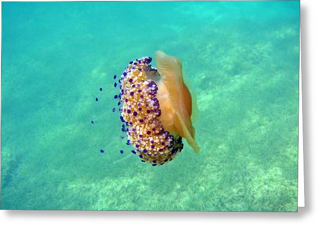 Unwelcome Jellyfish Greeting Card by Rod Johnson