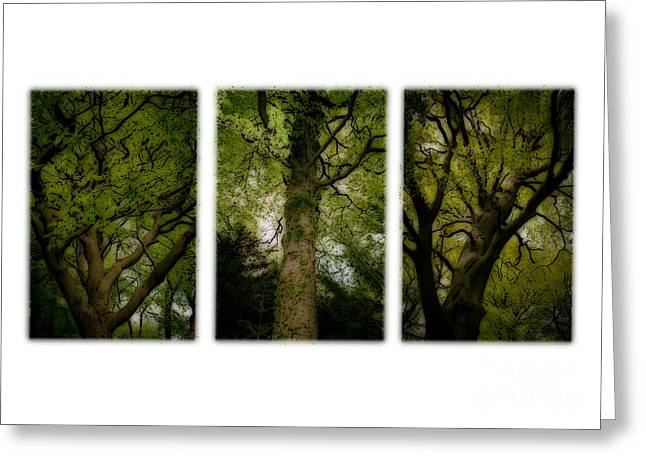 Up In The Trees Greeting Card