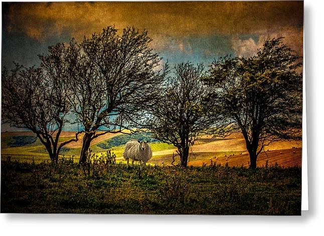 Greeting Card featuring the photograph Up On The Sussex Downs In Autumn by Chris Lord