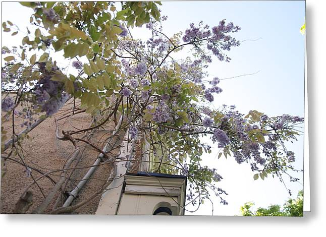 Up The Vine In Niagara On The Lake Greeting Card