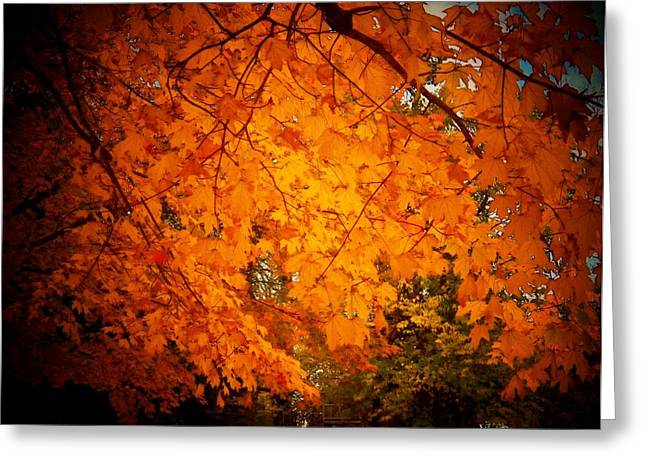 Upperville Leaves Greeting Card by Joyce Kimble Smith