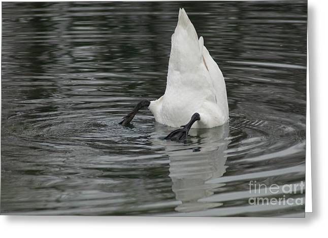 Greeting Card featuring the photograph Upside Down by Charles Lupica