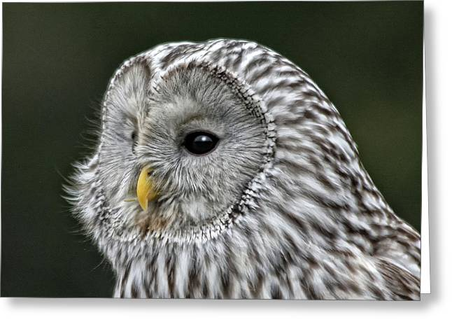 Ural Owl Greeting Card