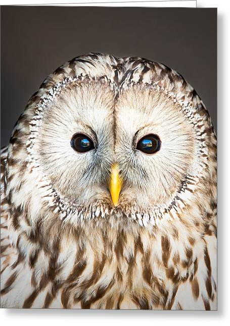 Ural Owl Greeting Card by Tom Gowanlock