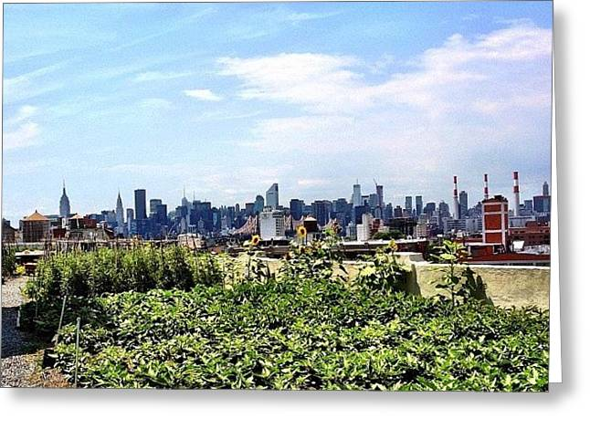 Urban Nature - New York City Greeting Card by Vivienne Gucwa