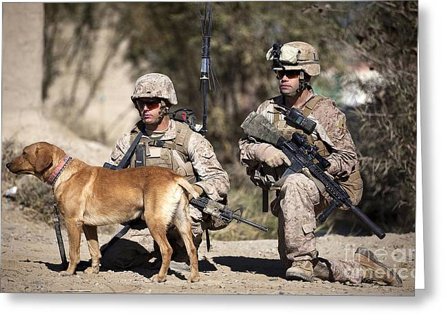 U.s. Marines And A Military Working Dog Greeting Card by Stocktrek Images