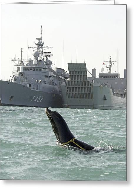 Us Navy California Sea Lion Greeting Card