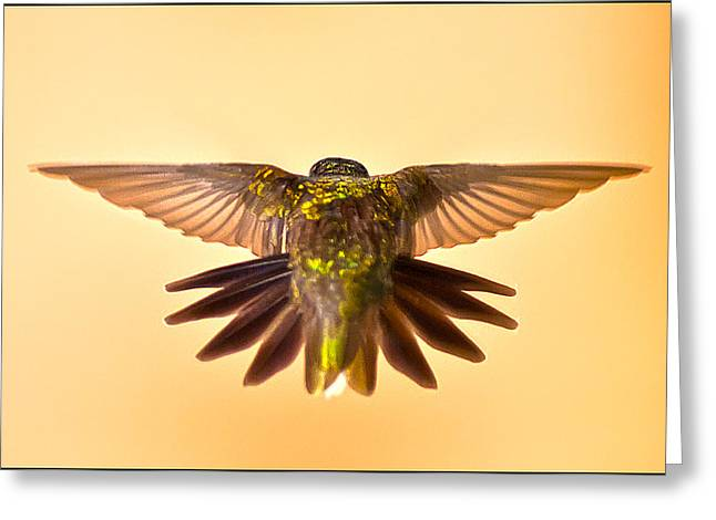 Greeting Card featuring the photograph Usaf Hummingbirds Wings by Randall Branham