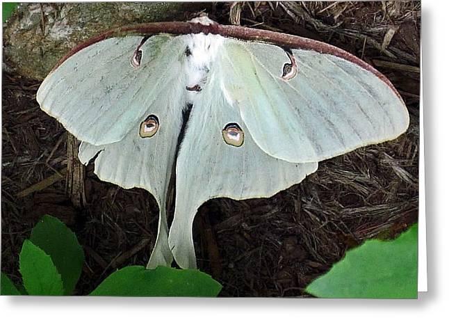 Va Moth Greeting Card