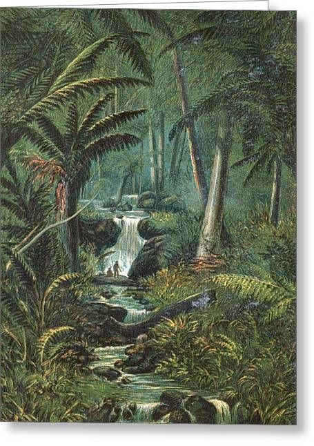 Valley In Tasmania, 19th Century Greeting Card by King's College London