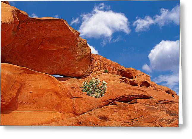 Valley Of Fire - Adventure In Color And Beauty Greeting Card by Christine Till