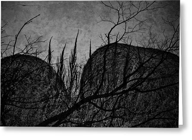 Valley Of Sticks Greeting Card by Empty Wall
