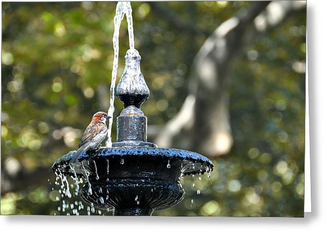 Van Vorst Fountain Greeting Card by JAMART Photography