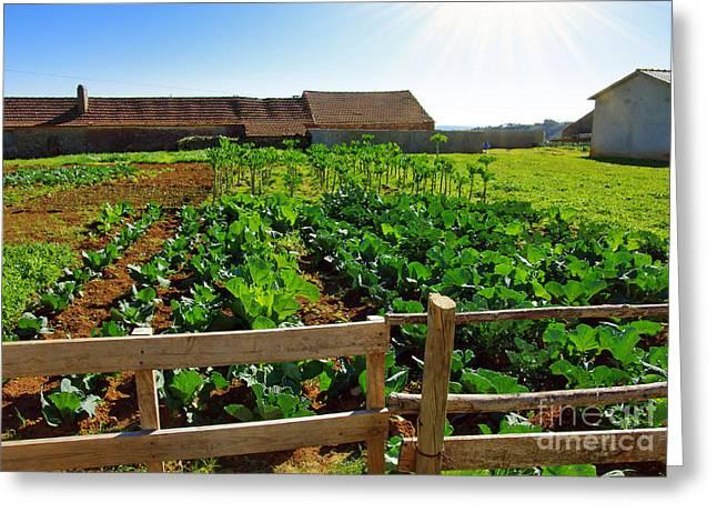 Vegetable Farm Greeting Card