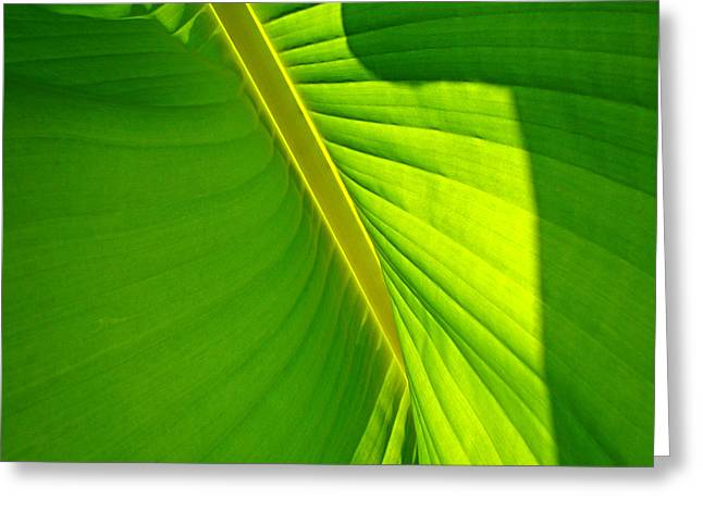 Veins Of Green Greeting Card by Nick Kloepping