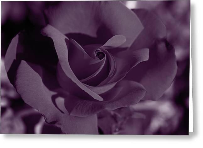 Velvet Rose Greeting Card by Aidan Moran