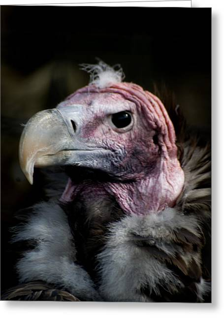 Vera The Vulture Greeting Card by Peter Jenkins