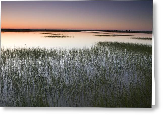 Vernal Pool At Sunrise Jepson Prairie Greeting Card by Sebastian Kennerknecht