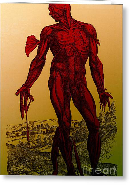 Vesalius De Humani Corporis Fabrica Greeting Card by Science Source