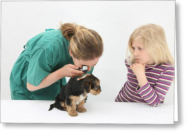Vet Using An Otoscope To Examine A Pups Greeting Card by Mark Taylor