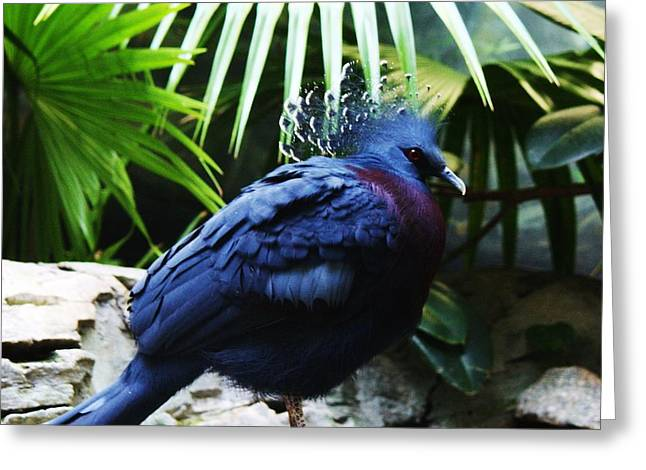 Victoria Crowned Pigeon Greeting Card by Paulette Thomas