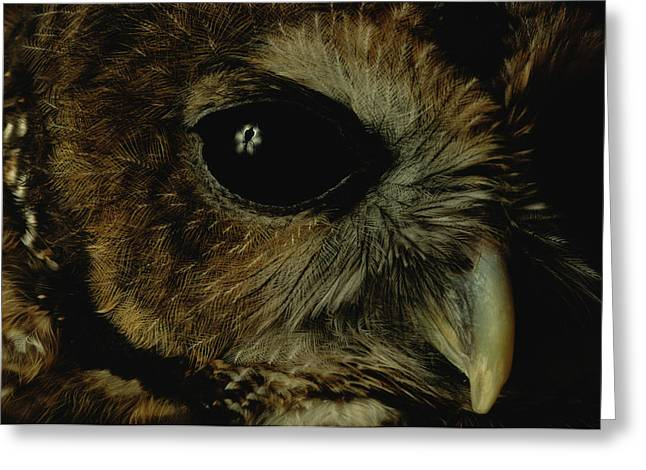 View Of A Northern Spotted Owl Strix Greeting Card