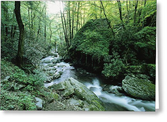 View Of Roaring Fork Creek Greeting Card by George F. Mobley
