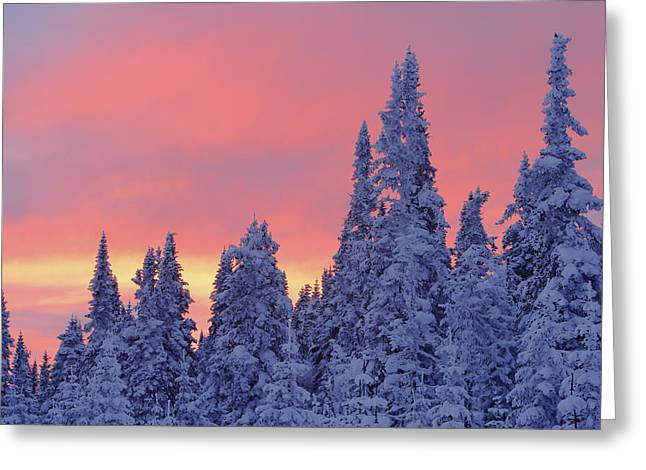 View Of Snow-covered Trees And Sky Greeting Card by Yves Marcoux