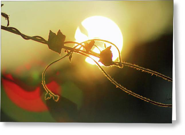 Vine Light Greeting Card