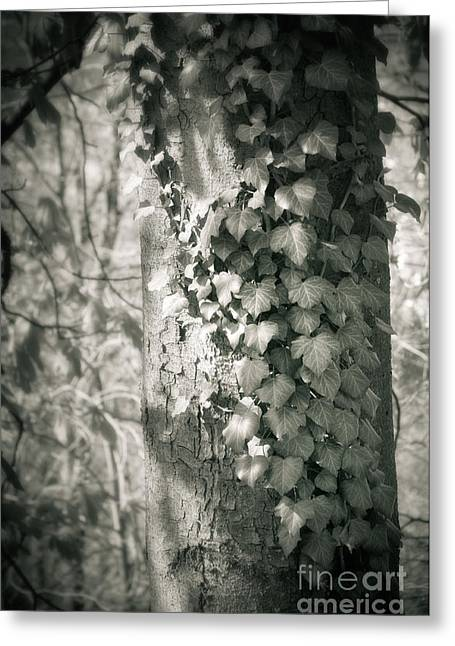 Vine On Tree Greeting Card by Silvia Ganora
