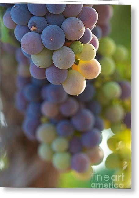 Vine Ripe One Greeting Card by Brooke Roby